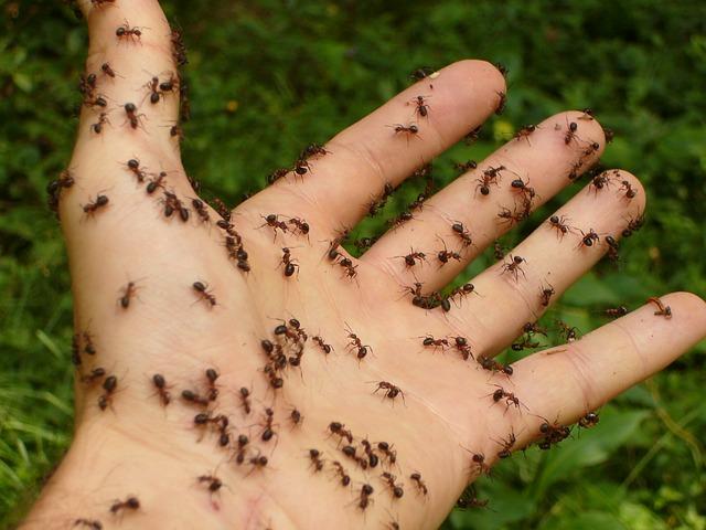 Mieren bestrijden? Tips voor binnen en buiten