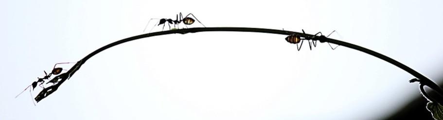 Mieren weren buiten