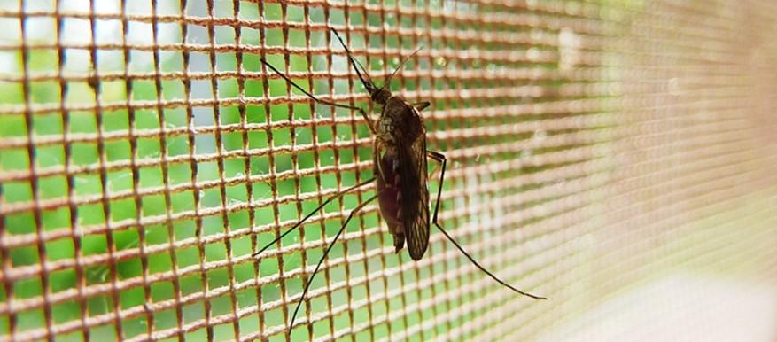 Muggen bestrijdings tips - hor