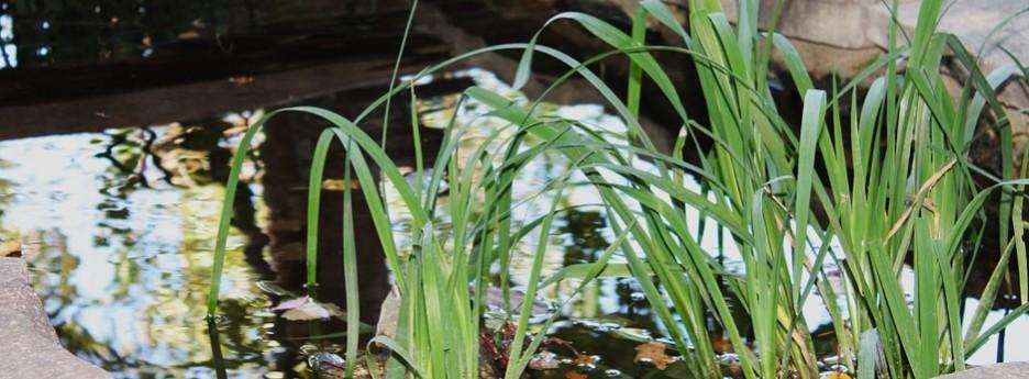 Muggenlarven houden van zoet stilstaand water