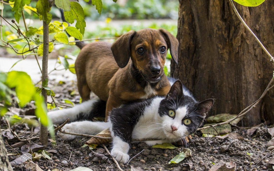Ongedierte bij je huisdier: zo bestrijd je vlooien en teken bij hond en kat